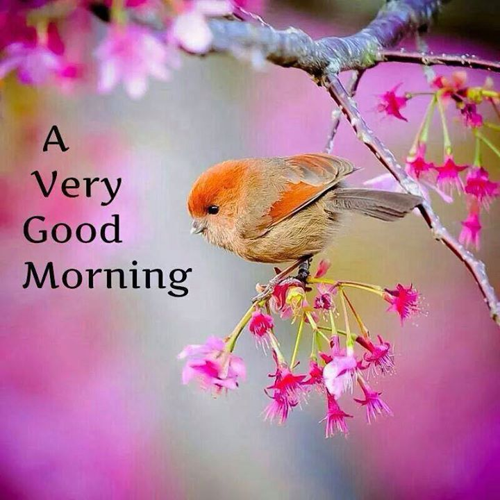 Good Morning Friends Beautiful Wallpapers, Photos, Pictures